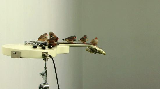 Celeste Boursier Mougenot~Les Oiseaux de Celeste Film
